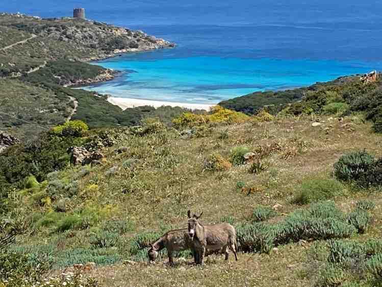 Sardegna in fuoristrada